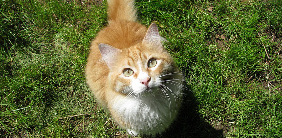 Is Bravecto for cats safe?