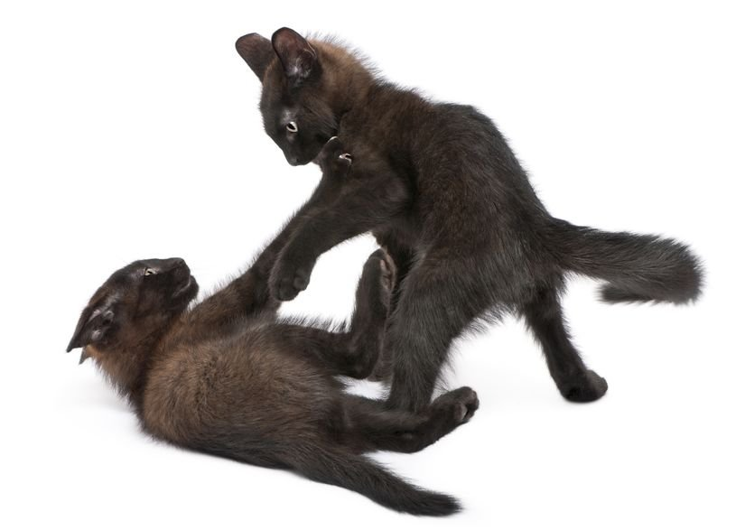 Why do cats kick with their hind legs?
