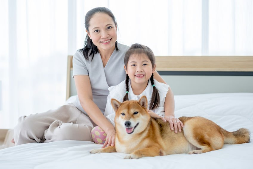 The health benefits of owning a dog