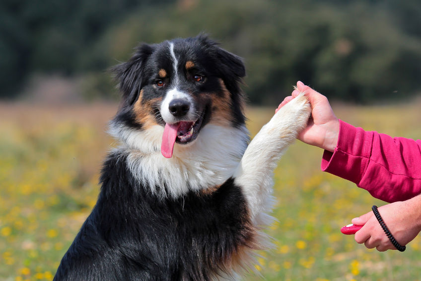 Five tips to help your dog live a longer life