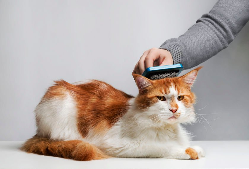 How to help a cat with matted fur