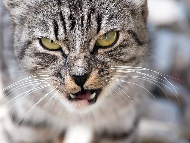 Curbing Cat Aggression