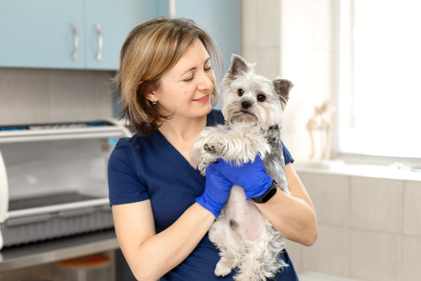 Five diseases that are totally preventable in dogs
