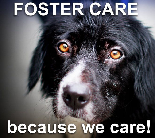Finding Forever Homes: Tips on Fostering a Pet