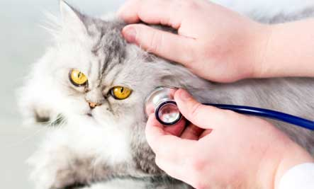 Common Cat Illnesses and Their Symptoms