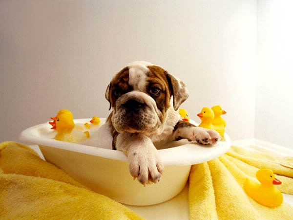 Stinky Mutts Need Showers: How to Wash Your Dog