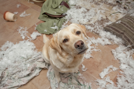 A Bored Dog is a Naughty Dog - It's Time to Be a Better Pet Owner