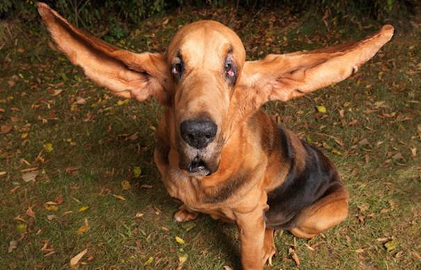 How To Look After Your Dog's Ears