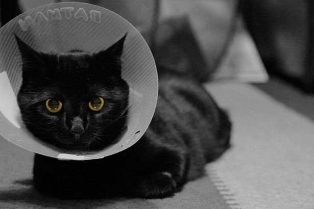 Side Effects and Adverse Reactions of Spaying a Cat