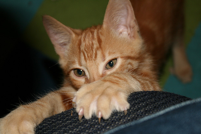 What To Do About A Cat Scratching Furniture