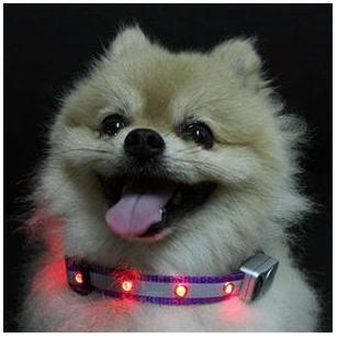 Flashing Dog Collars