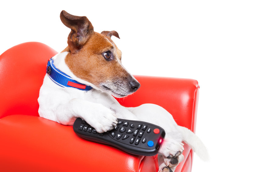 Do dogs actually watch television?