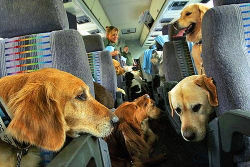 Airlines: Safely Transporting Your Pet