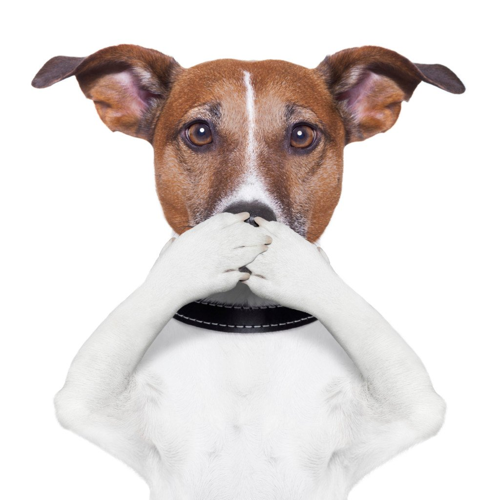 Dogs And Their Stinky Breath