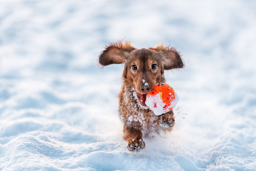 How much playtime does my dog need?