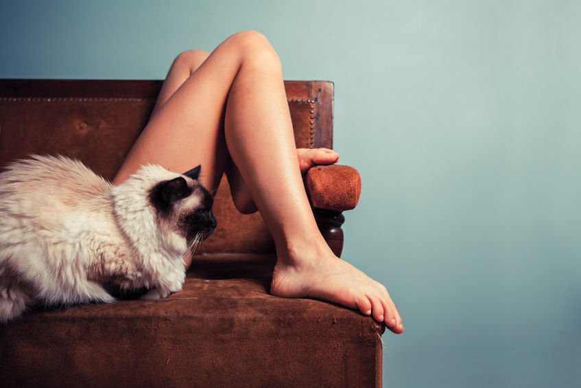 How to stop cats from attacking your feet