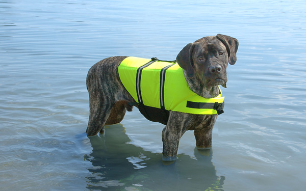 Why You Should Consider A Dog Life Jacket