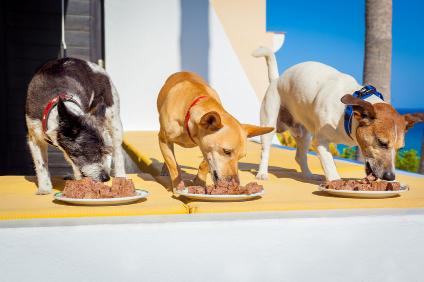 Why is your dog hoarding his food?