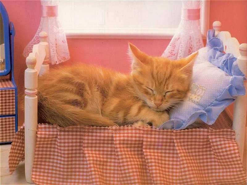 What Sort Of Bed Is Right For Your Cat