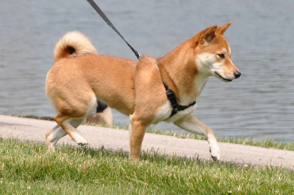 Encountering Other Dogs: How to Avoid Trouble on the Walking Path