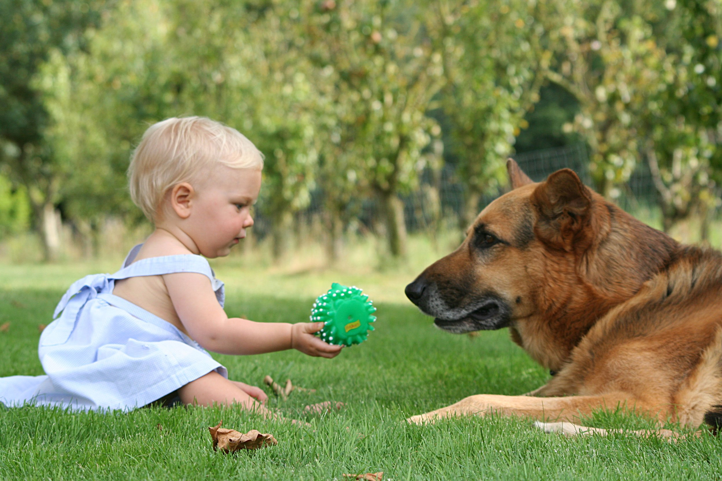 Involving Children In Caring For Family Pets