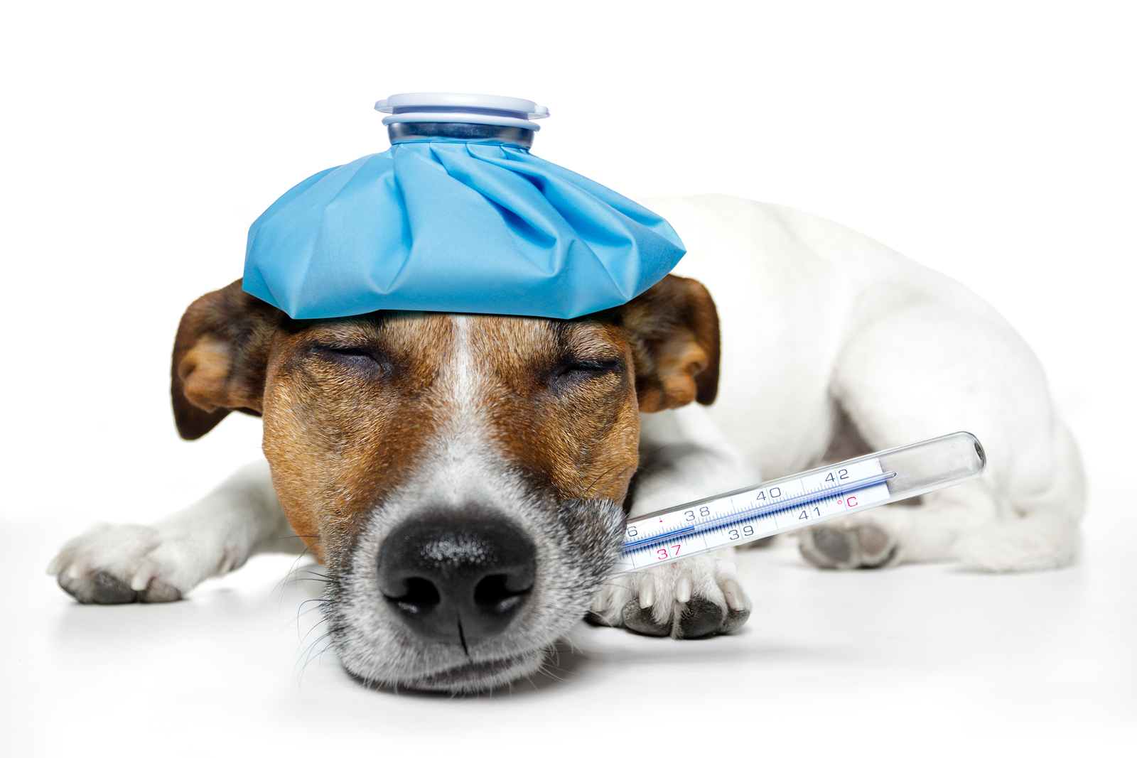 Can Your Pet Make You Sick?
