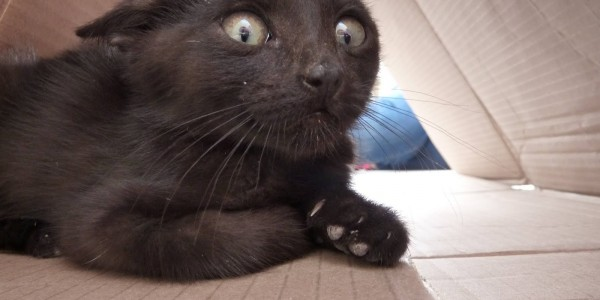 Scaredy Cat: How to Handle a Frightened Feline