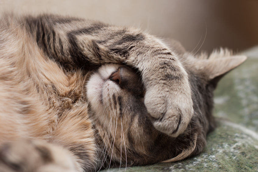 What you need to know about stomatitis in cats