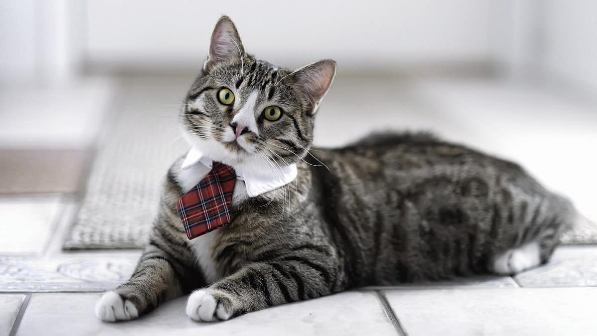 5 Startups for Cat Lovers