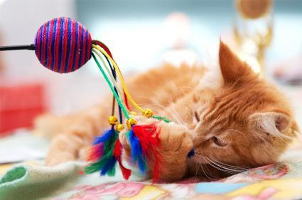 Top 5 Interactive Toys For Cats