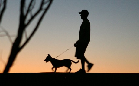 3 Ways To Keep Your Dog Safe On Night Walks