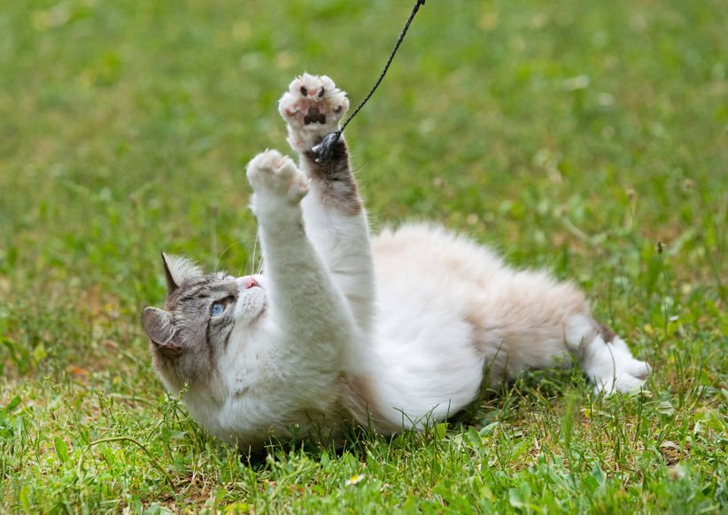 Can you really teach a cat tricks?