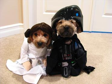 8 Pets Who Are Star Wars Look-a-Likes