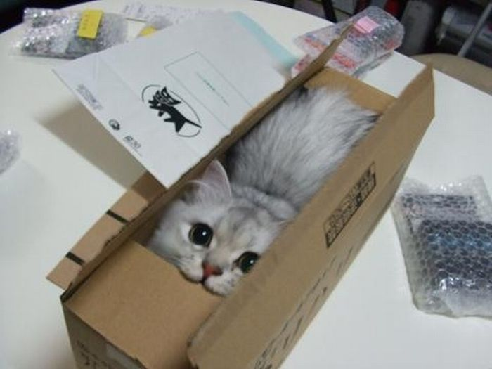 Why Do Cats Love Boxes So Much?