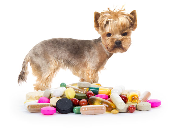 dog pet meds