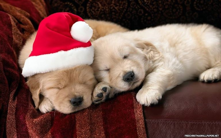 puppies sleeping christmas hat