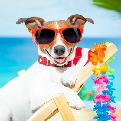 How prepare your dog up for success during your next vacation