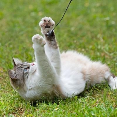 Can you really teach a cat tricks?