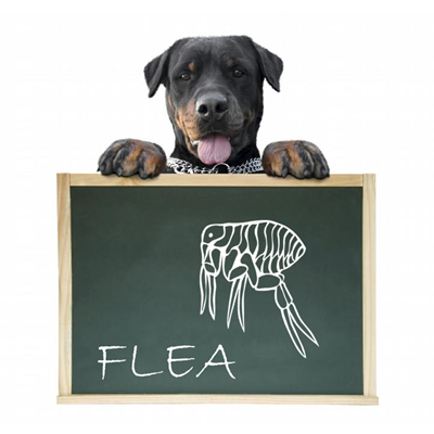 Know Your Enemy (The Flea)