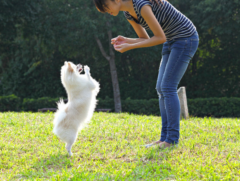 How to replace dogs' problem behaviors using differential reinforcement