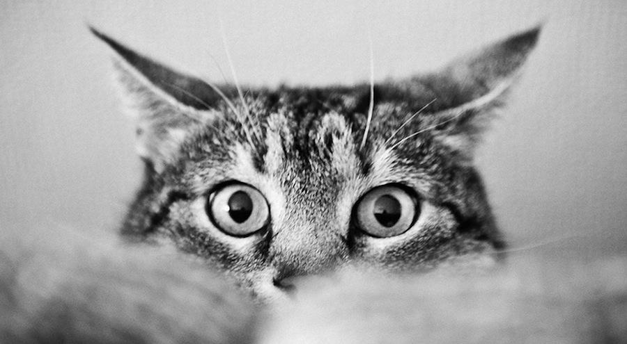 Como o seu gato vê-lo?