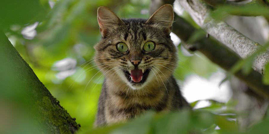 Como lidar com um gato agressivo