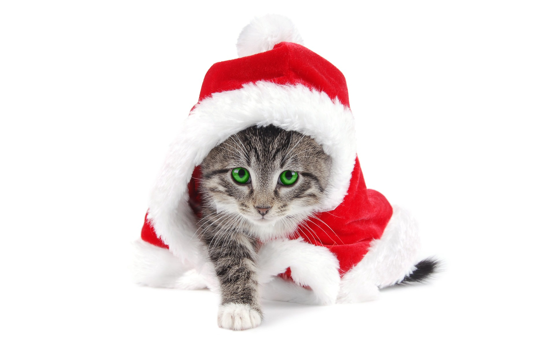 Guia do presente do Natal para gatos