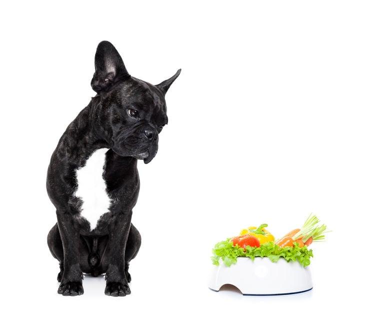 Evite alimentar o seu cão estas frutas e legumes