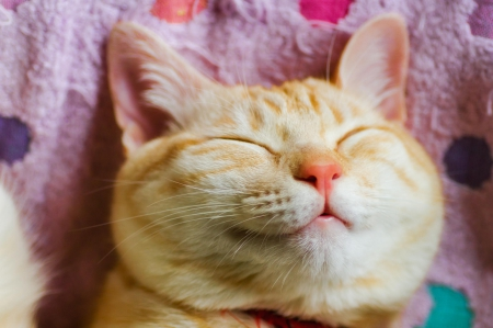 10 Helpful Items For Happy Cats