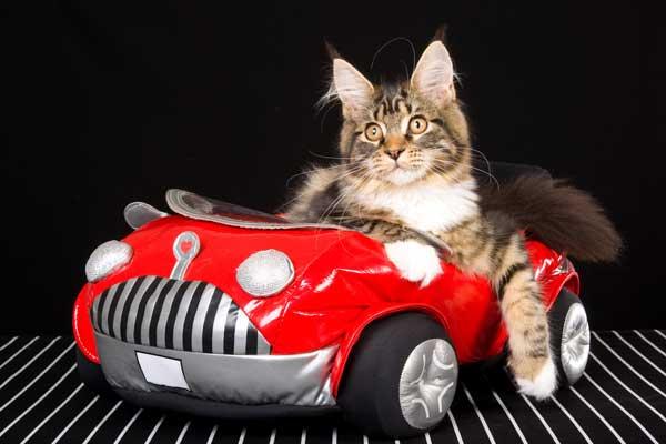 10 gatos com Sweet Rides