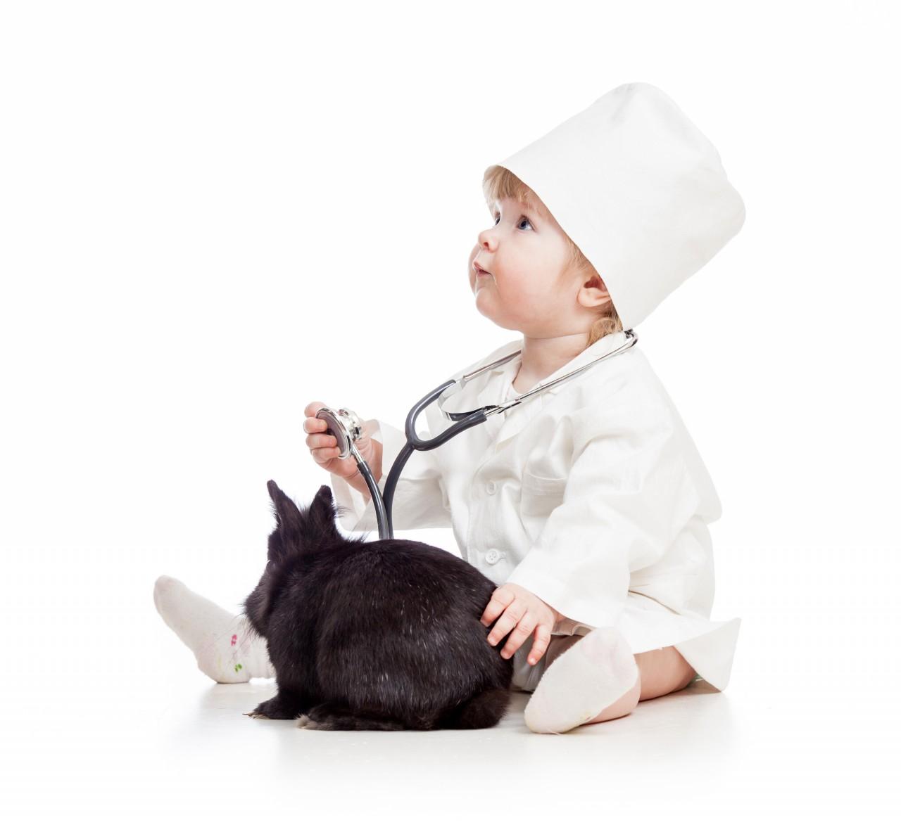 Investigando Seguro Veterinário: Como decidir sobre uma política [INFOGRAPHIC]