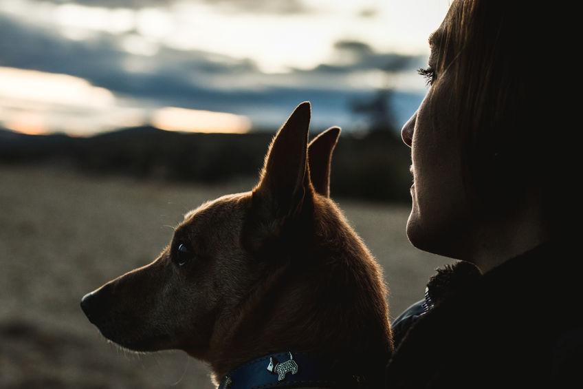 Was tun, wenn Ihr Hund Ihren neuen Partner hasst?