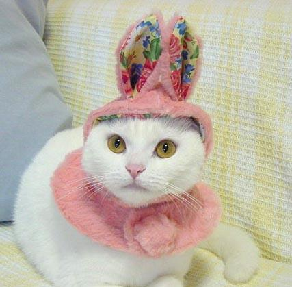 9 Cats Embracing Their Inner Easter Bunny