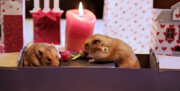 WATCH: How Hamsters Celebrate Valentine's Day
